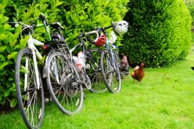 Bikes and chickens