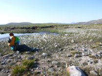 Rob capturing the bog cotton in the centre of the Cairngorms